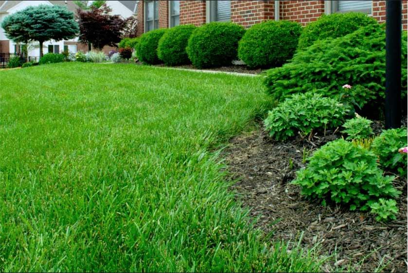 Turf Pro Plus Cincinnati Ohio Lawn Care